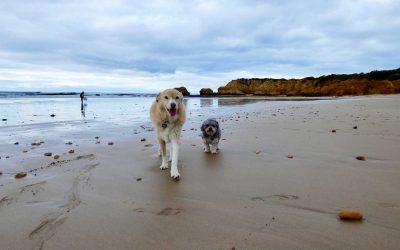 Behaviour Case Study – Diesel & Harvey